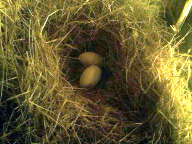 It began with two goose eggs.