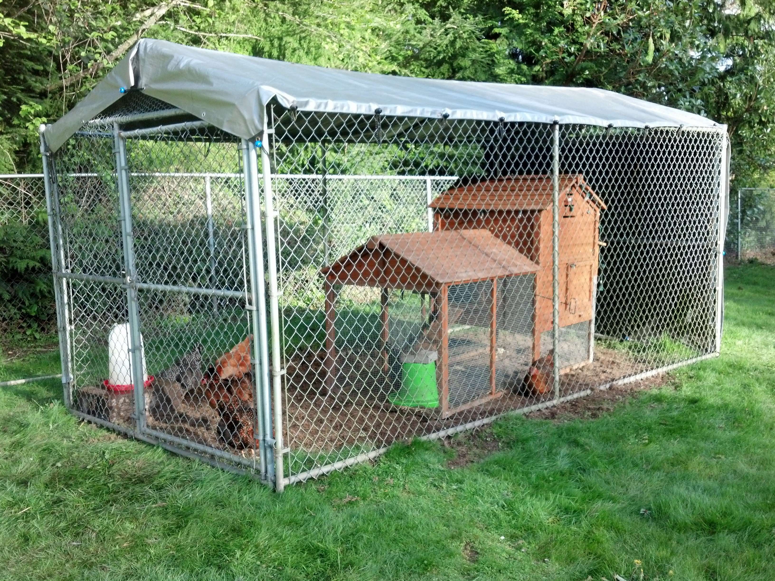 New Chicken Palance Inside The 7 X14 Predator Proof Coop Chicken Wire Hand Sewed Over The Front And Rear Door Areas Chainmail Buried Under The Walls Of The Coop Backyard Chickens