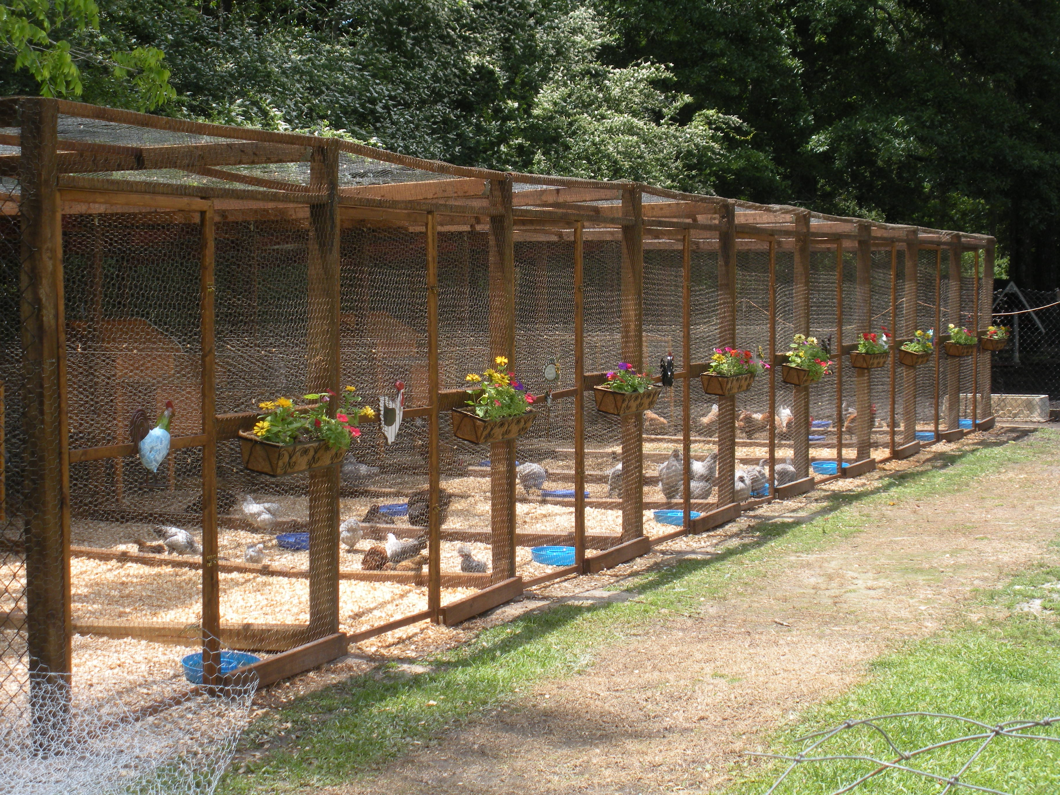 New Chicken Pens We Built Backyard Chickens Learn How To