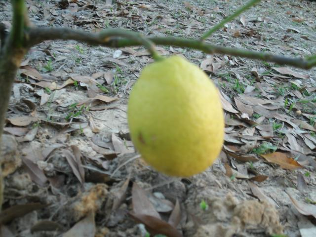 Our first lemon.