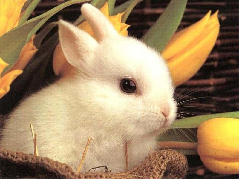 cute-bunny-rabbit---.jpg