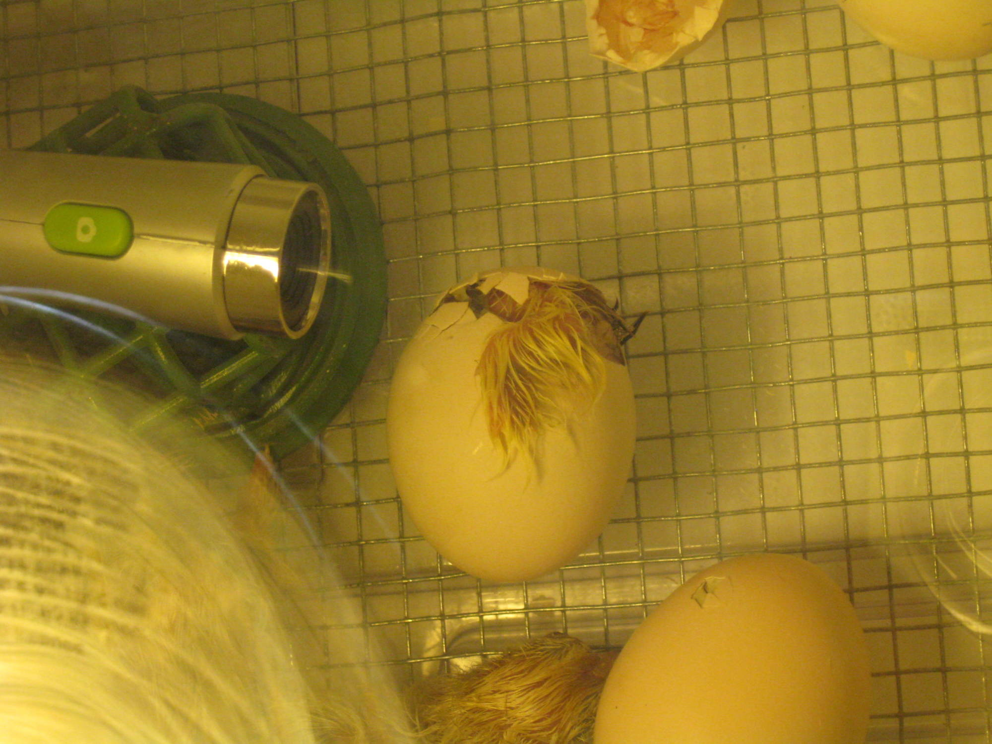Camera and egg hatching