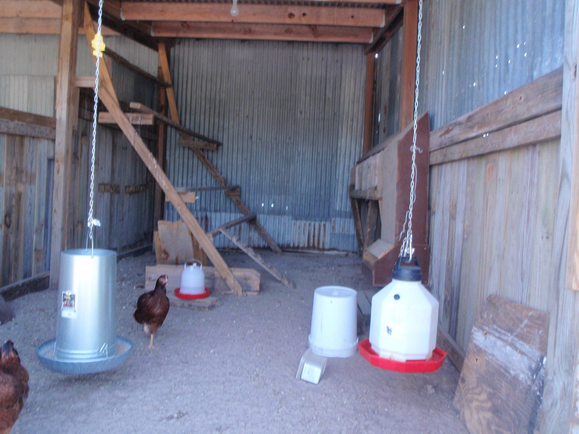 Inside the coop 001.JPG