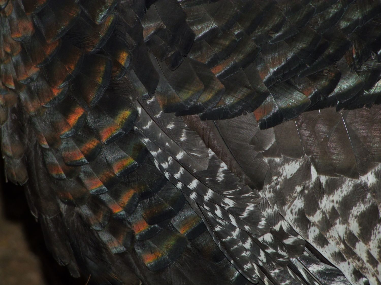 turkey 012.JPG
