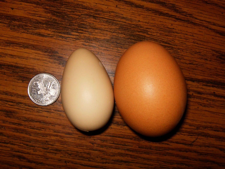 eggs 5.JPG