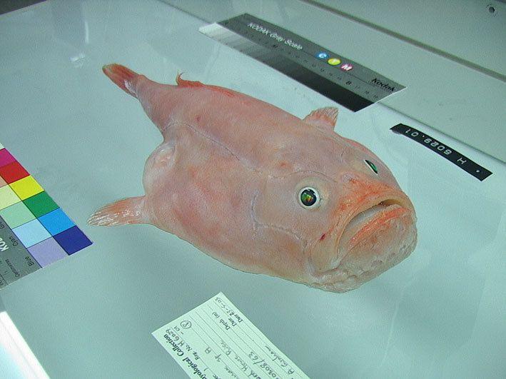Coffinfish.jpg