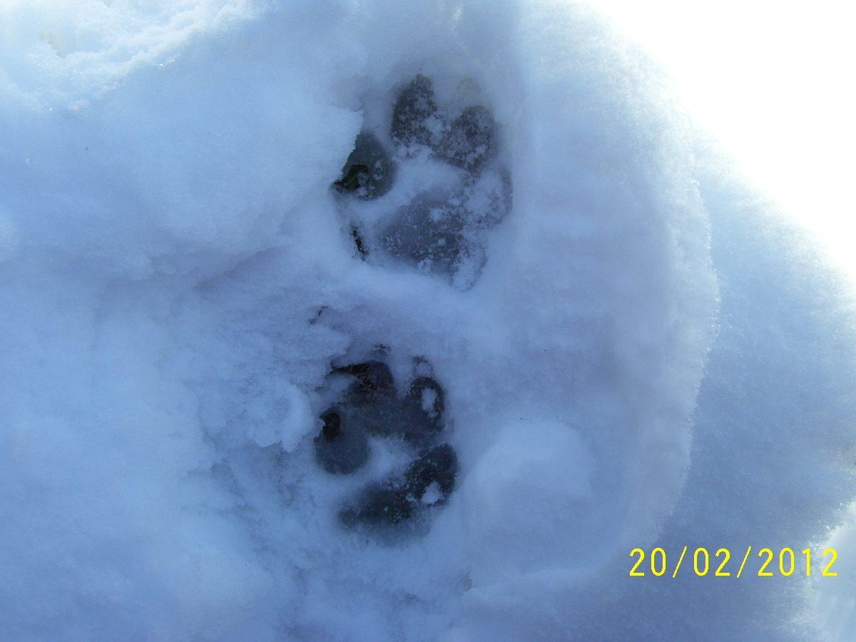 snow 063.JPG