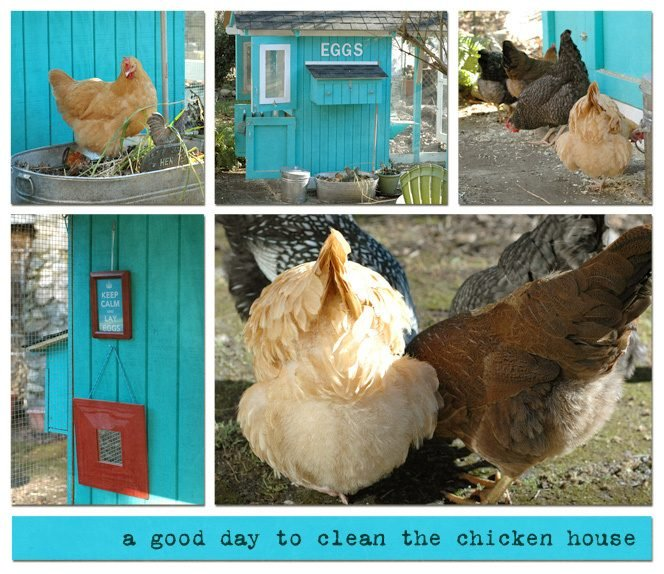 Bluebetween S Chicken Coop Backyard Chickens Community