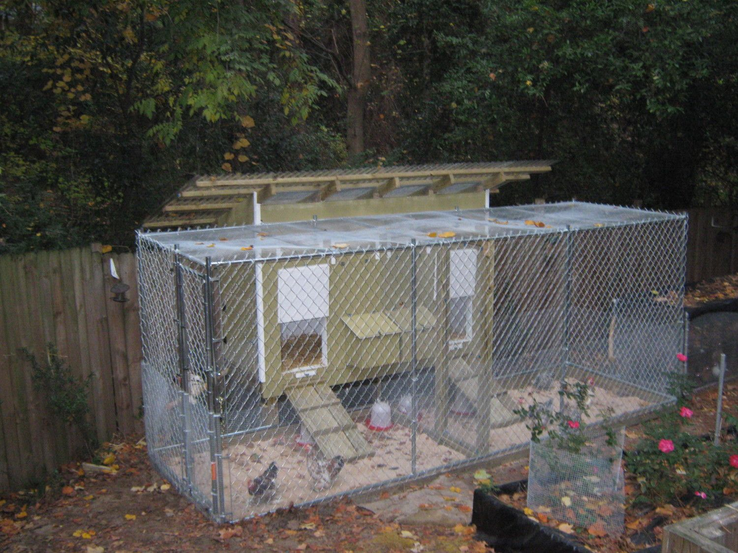 10x10 dog kennel as open coop tips | BackYard Chickens