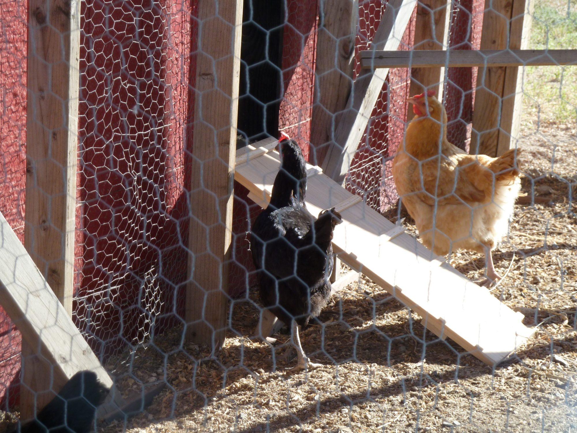 Chicken coop 045.JPG