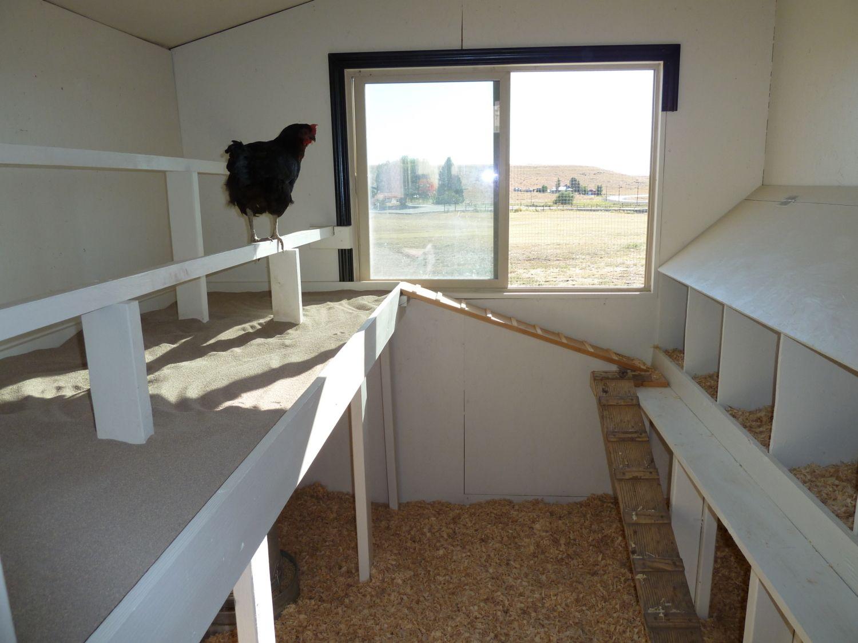 Chicken coop 059.JPG