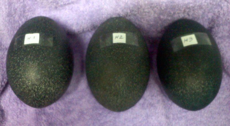 new eggs H.jpg