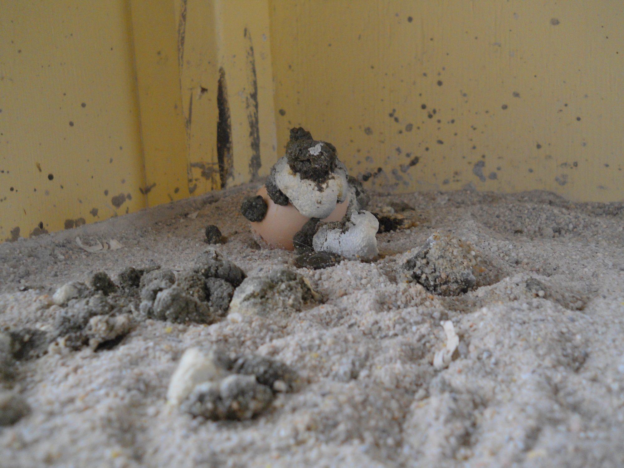 egg-poop 019.JPG