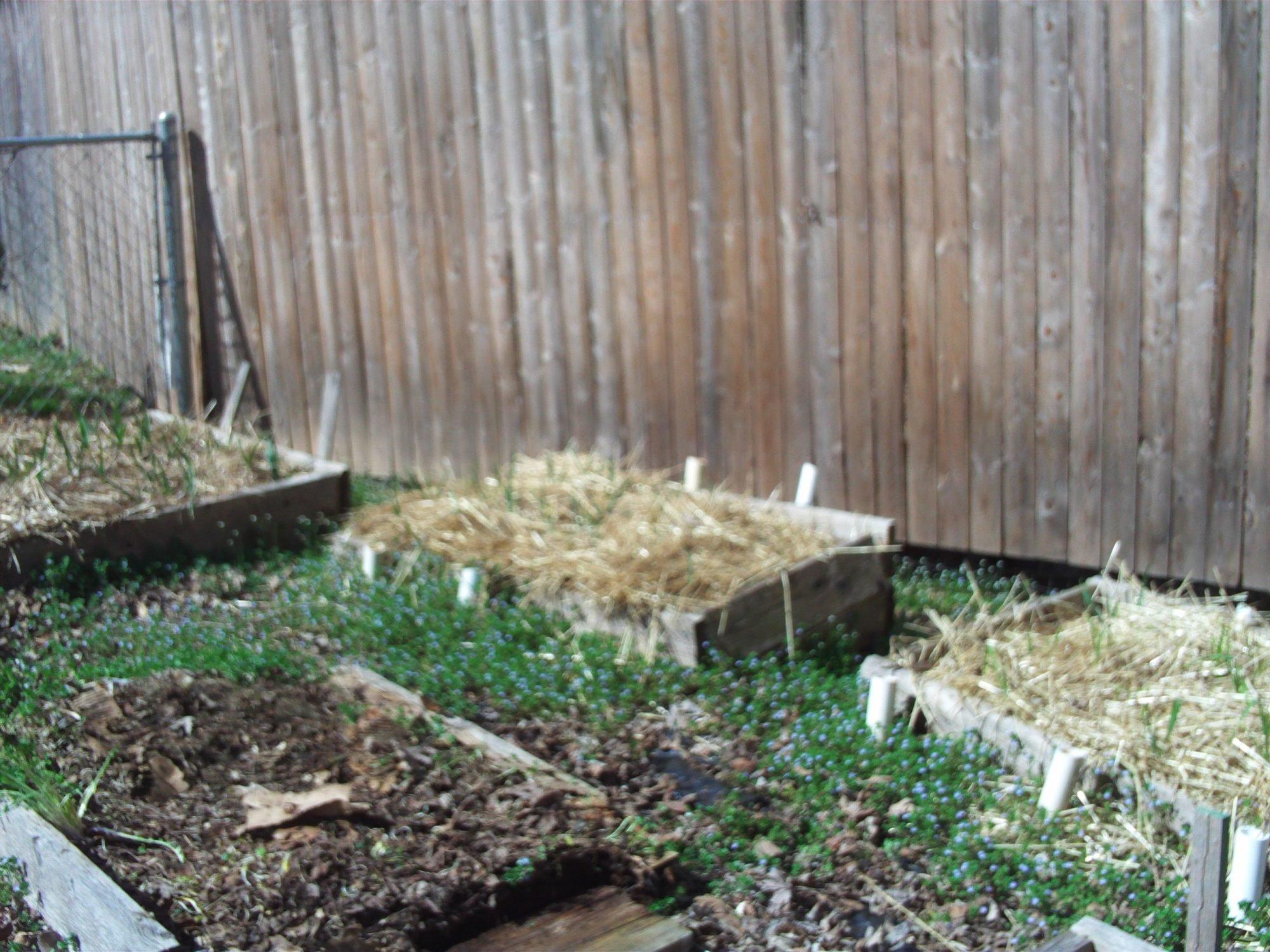 garden and coop 3 21 2012 006.JPG