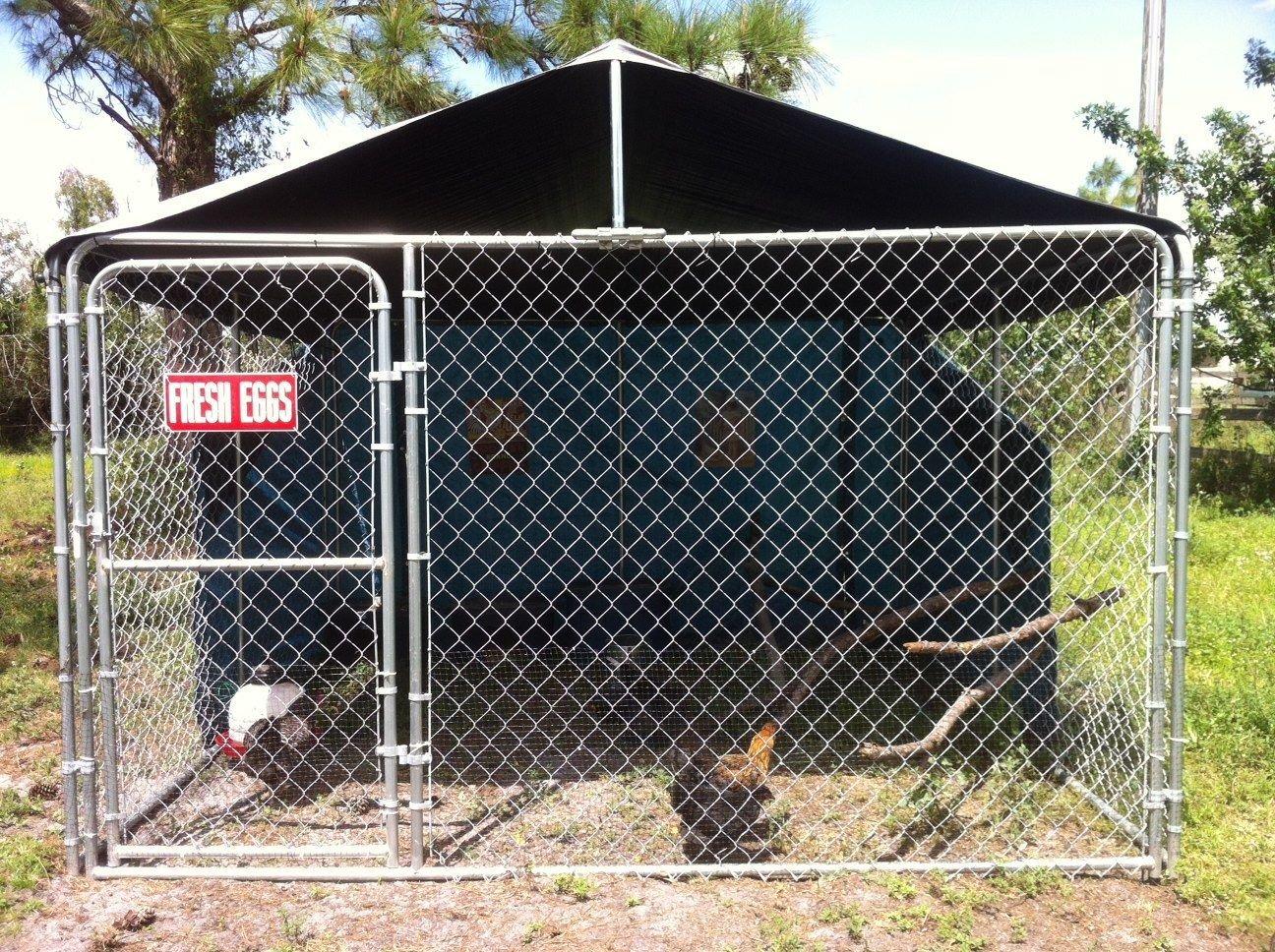 Dog Kennel Coop Backyard Chickens Community