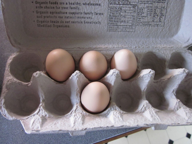 3-31-2012 chickens 027.JPG