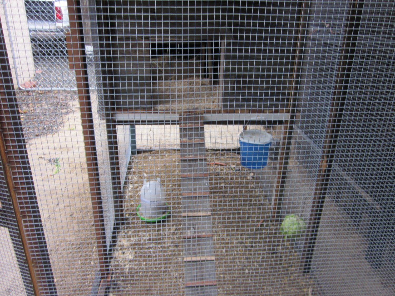3-31-2012 Chickens 017.JPG