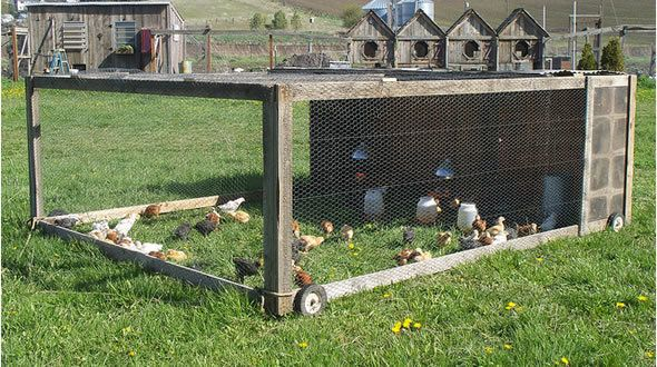Pasture for cornish crosses for Cheap chicken tractor