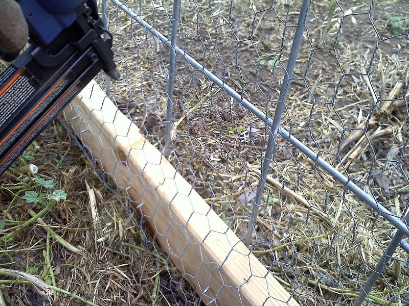 hoop coop 16.jpg