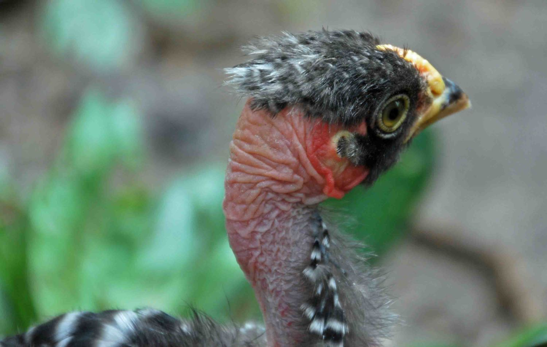 chick2.jpg