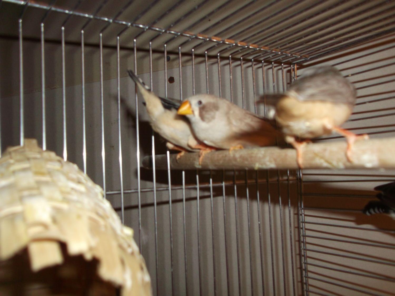 birdies 013.JPG