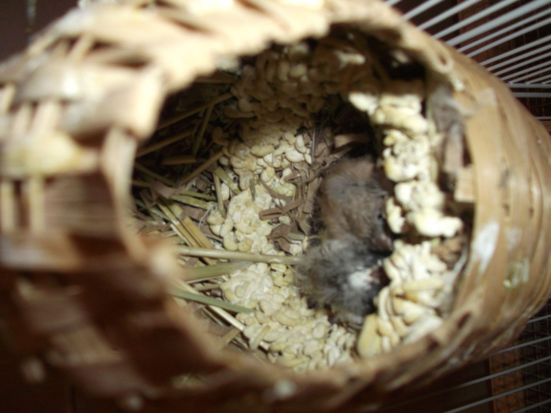 birdies 018.JPG