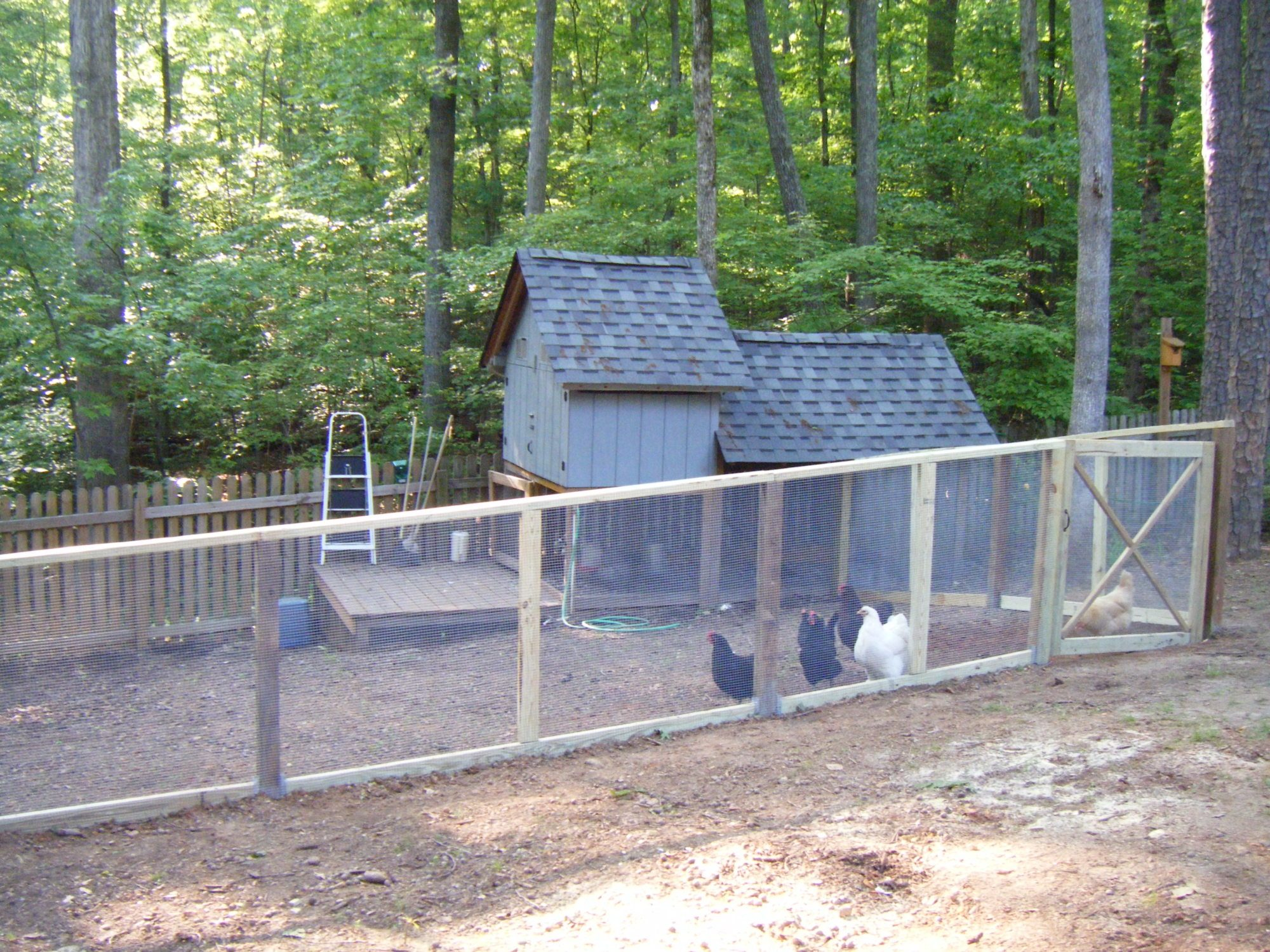 new fenced in chicken yard pics