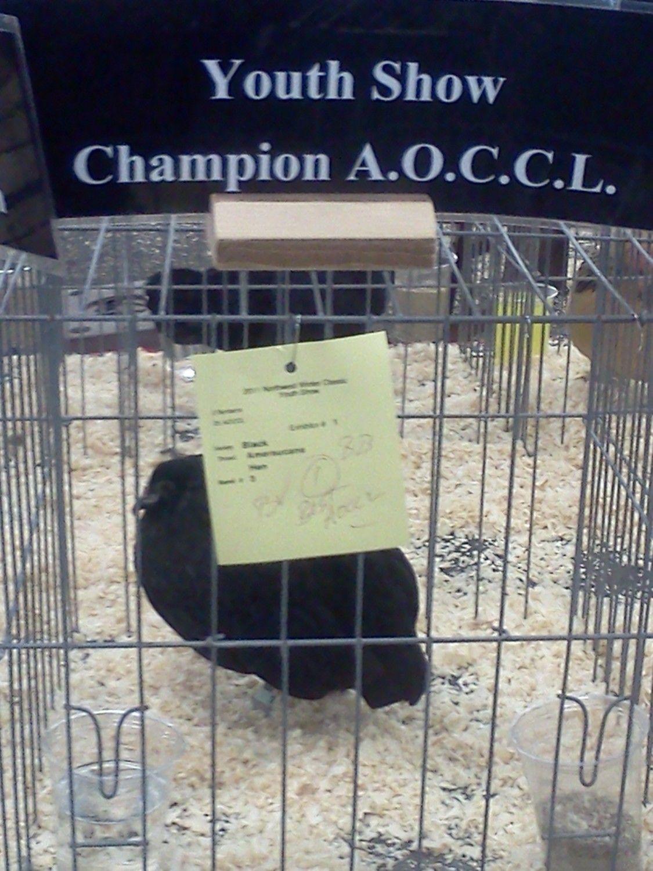 championaoccl2.jpg