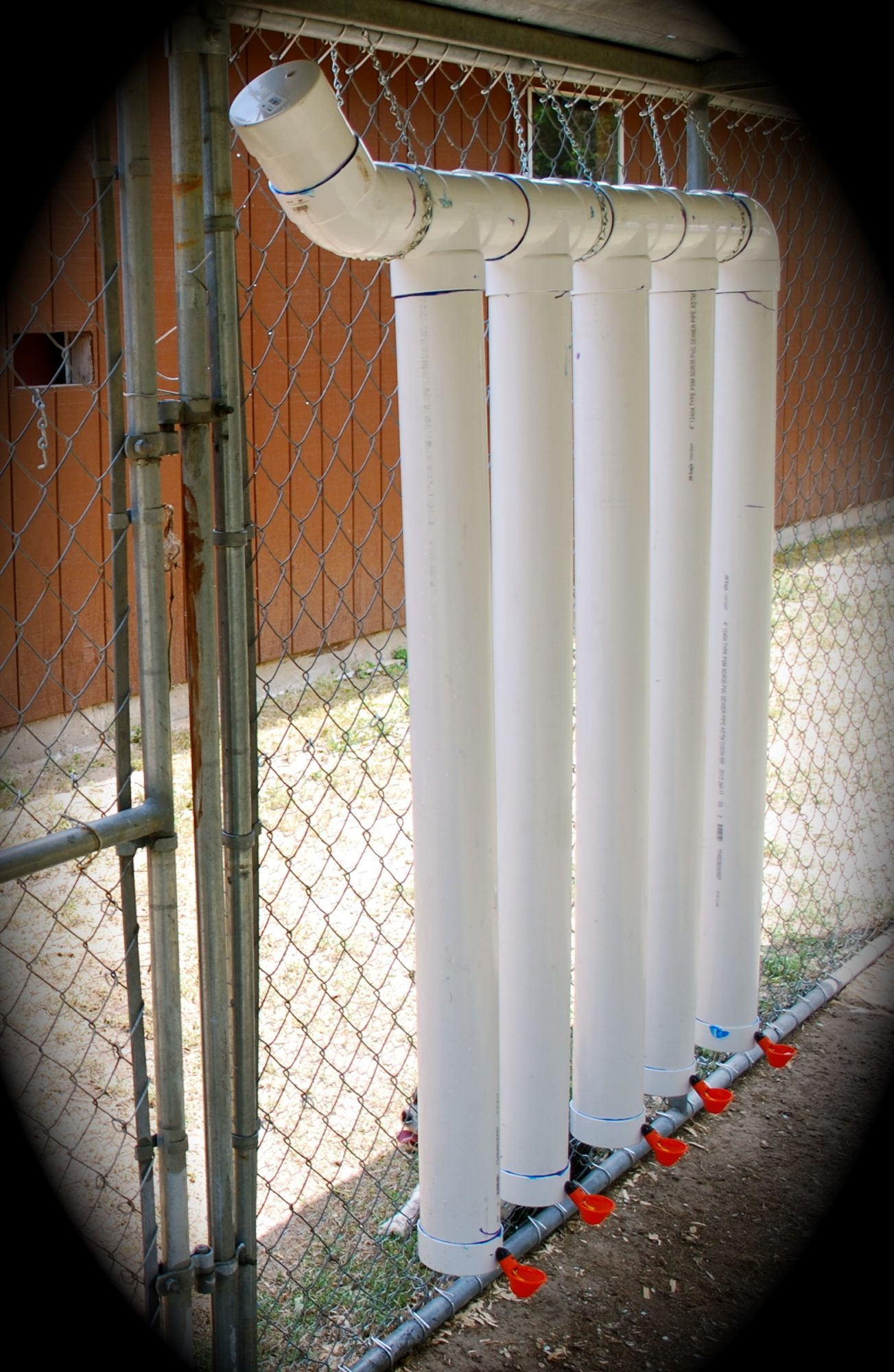 awesome pvc chicken feeder vs cup waterers and auto fill page 6 994
