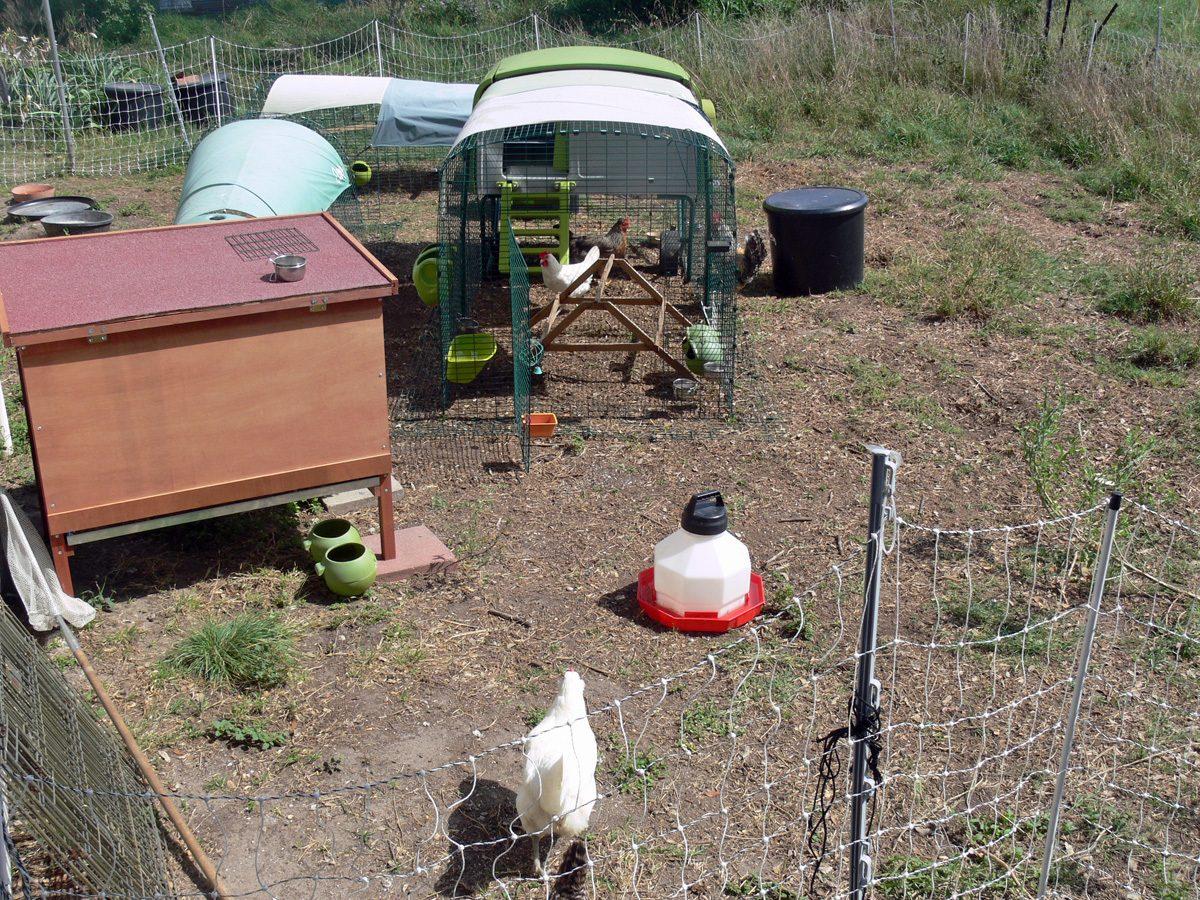 ChickenLand May2012.jpg
