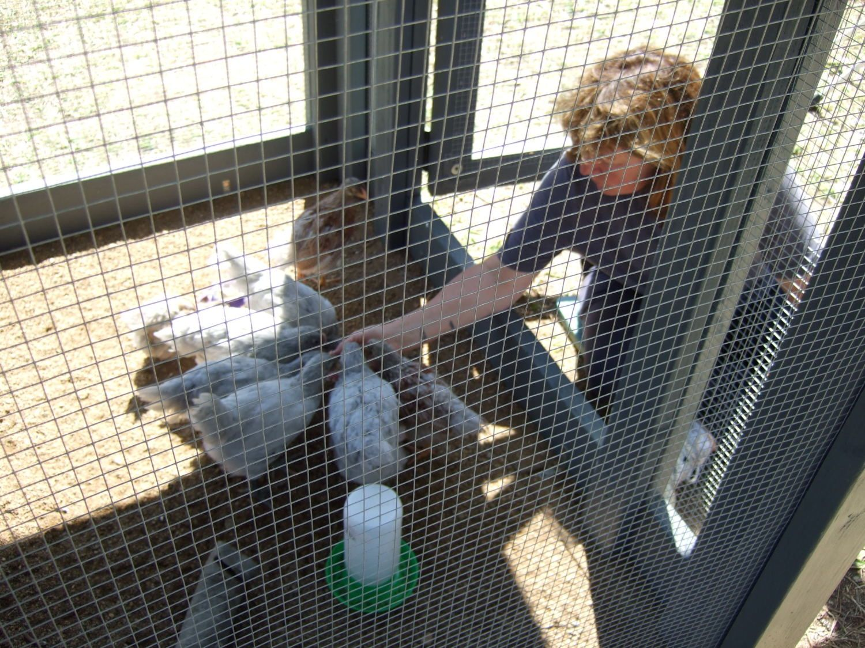 Chicken Coop 054.JPG