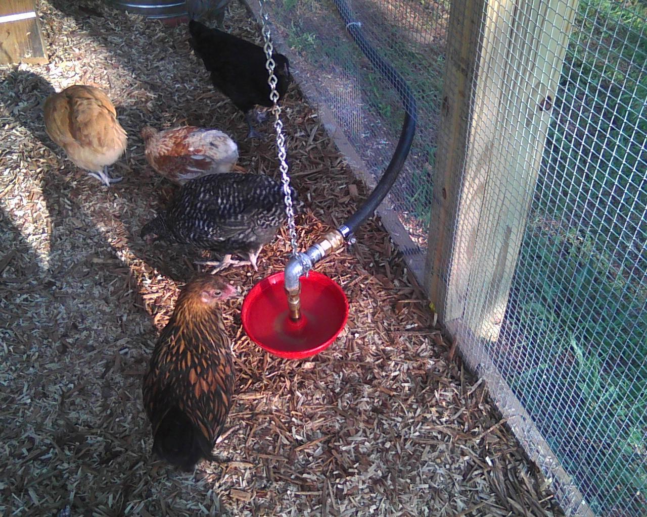 How To Hang A Galvanized Bell Waterer