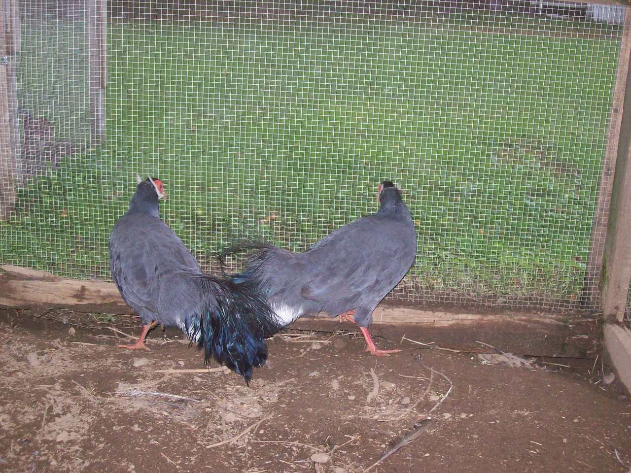 Tonys birds 377.jpg