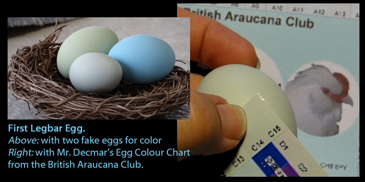 egg colors chart plus fake eggs.jpg