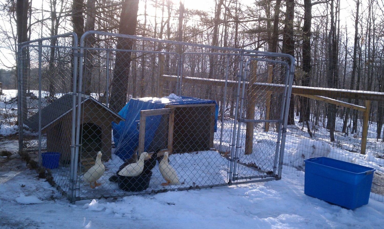 In a process of building a coop pen combo with all for Winter duck house