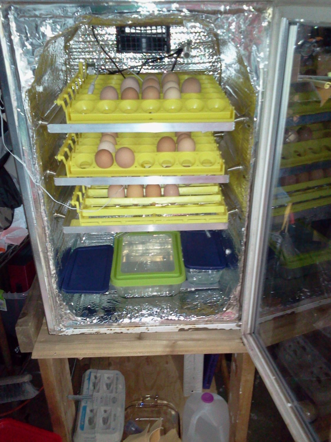 Fridge with RIR eggs.jpg