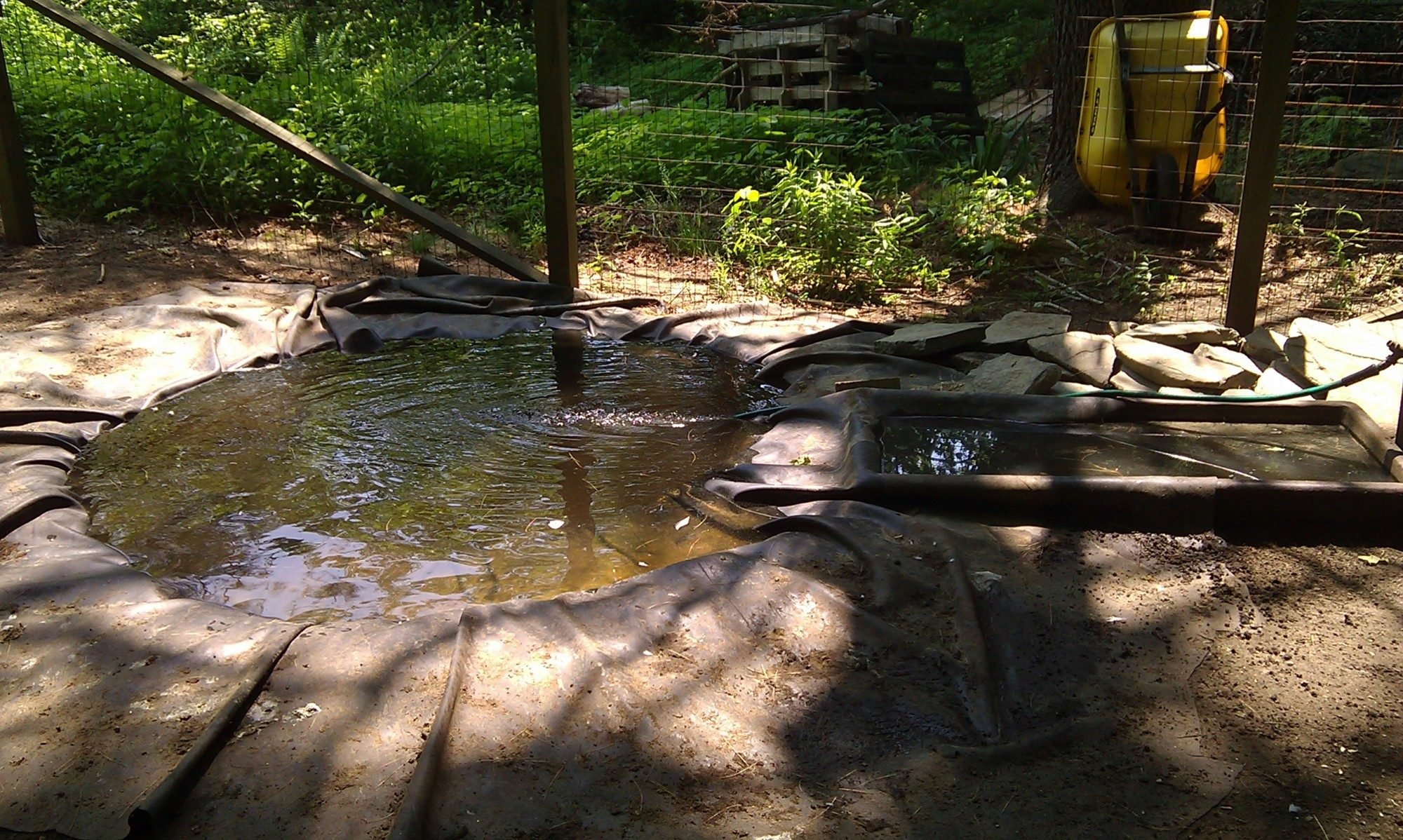 What to use for a duck pond and how to keep it clean for Building a pond