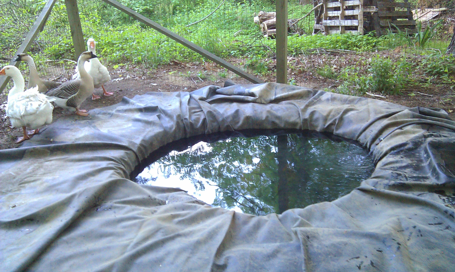 What to use for a duck pond and how to keep it clean for Make pond liner