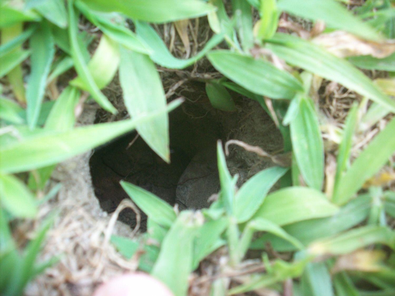 Poop Found In Garden Need Help Identifying Animal Update Nest Found Backyard Chickens