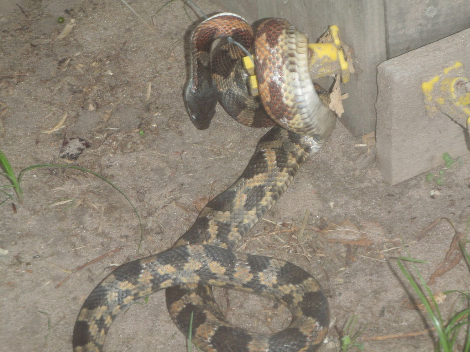 Electric Fence Electric Fence Snake Photo