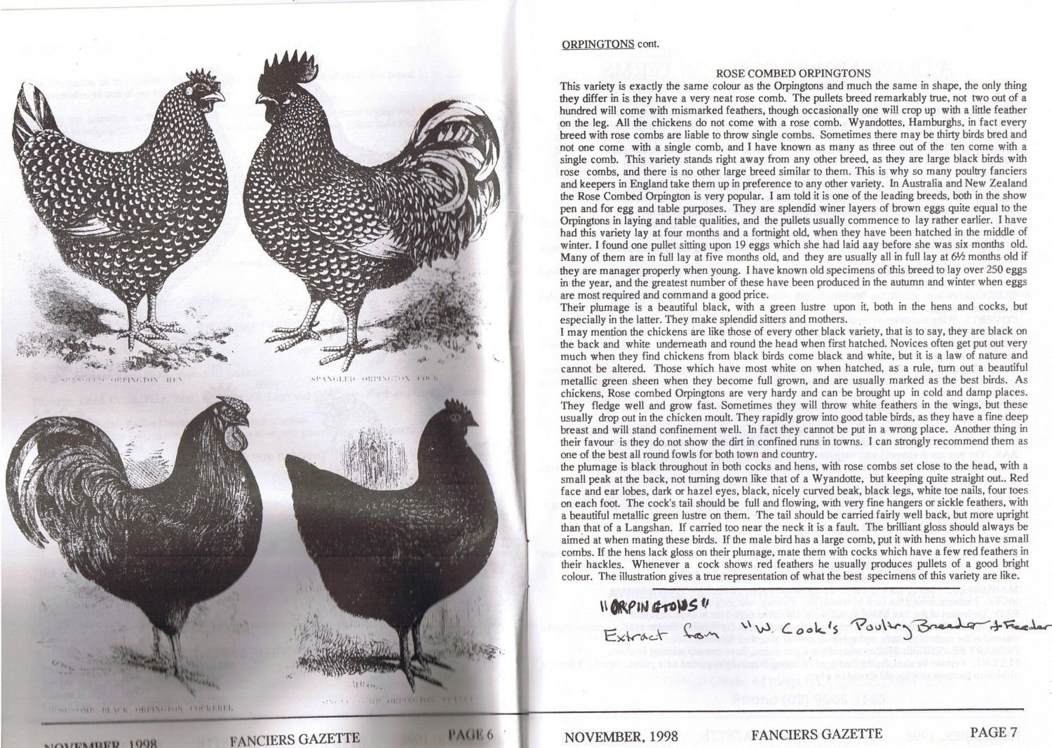 australorps breed thread page 113 backyard chickens