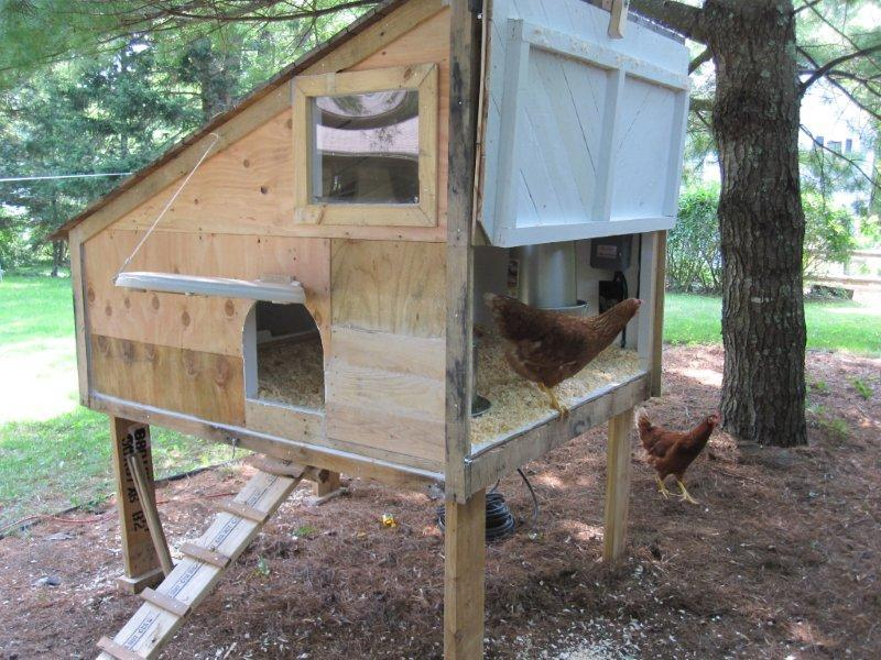 Cheap And Recycled Backyard Chickens Community