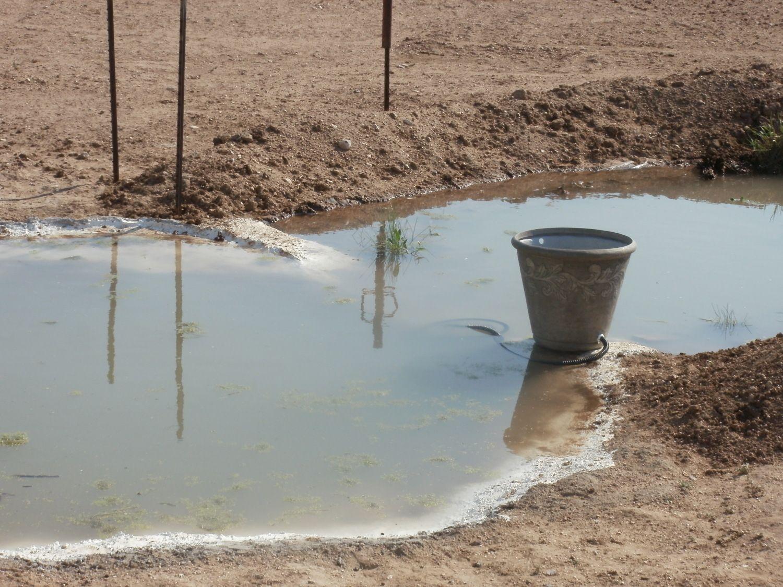 triyae com u003d backyard duck pond filter various design