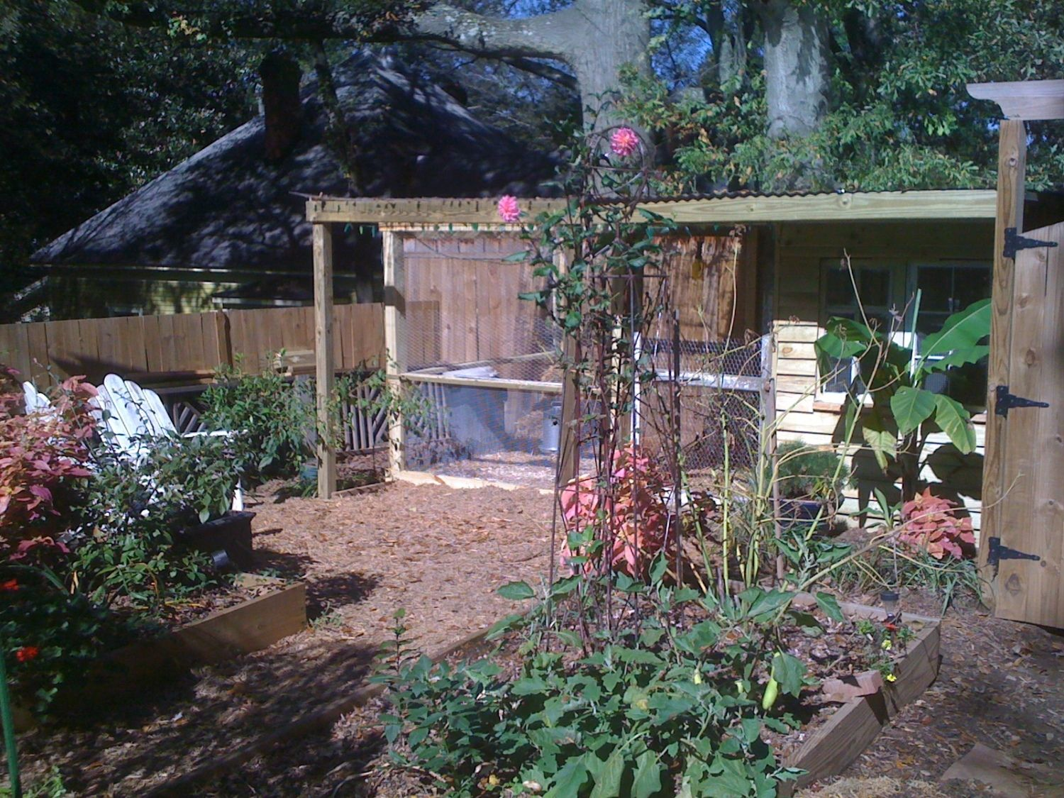 silkie coop renovation lots of pics backyard chickens