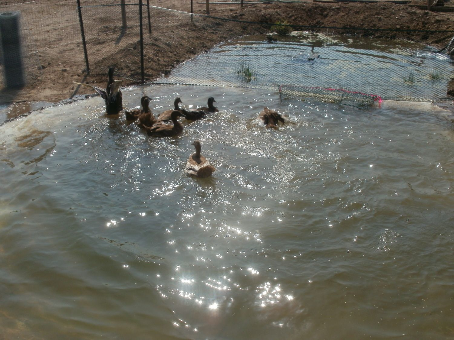 Questions about making a duck pond page 3 for Biofiltration pond