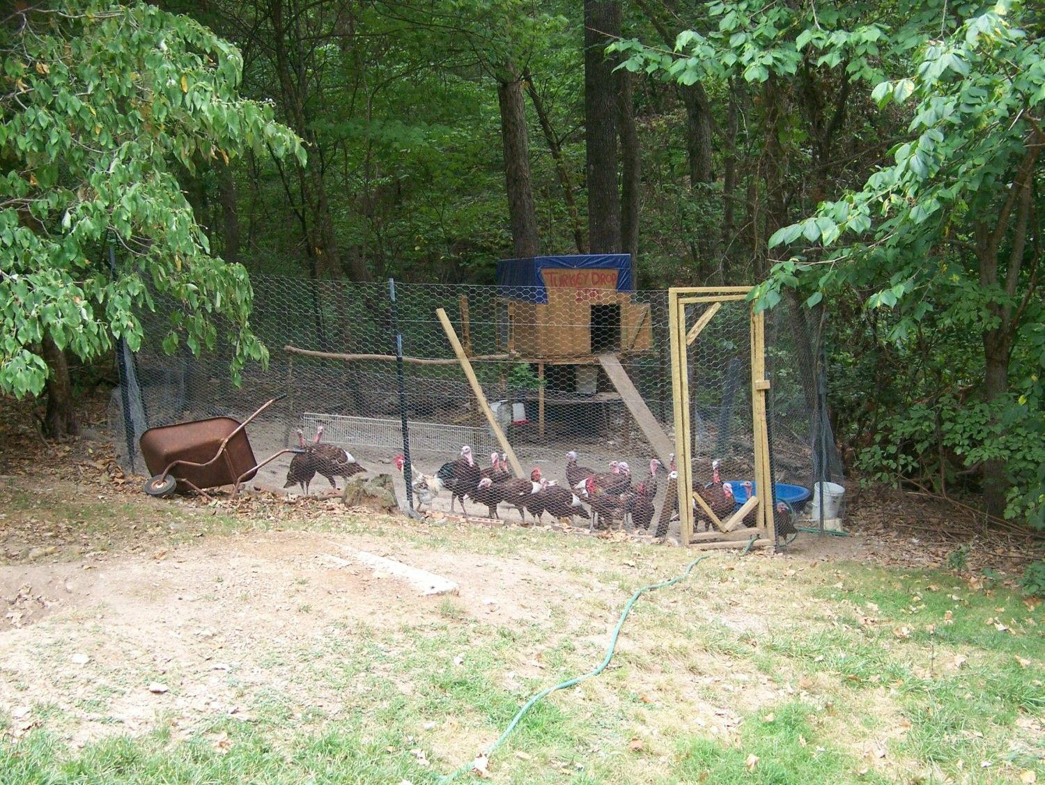 turkey and chicken coops the good the bad and the ugly post your