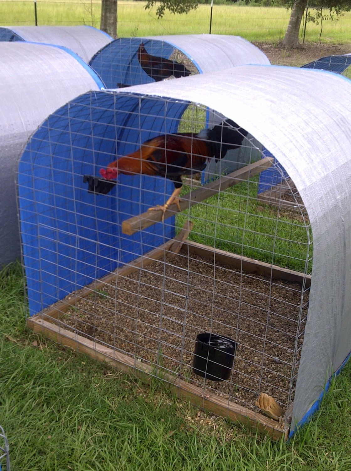 Gamefowl Pens For Sale http://www.backyardchickens.com/t/106767/show-off-your-games/3930