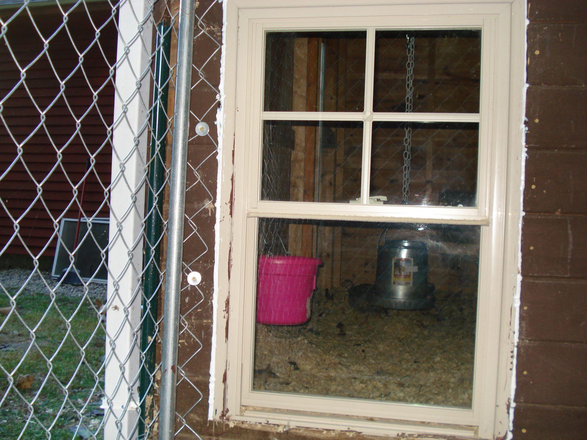 Vinyl window chicken door with pictures backyard chickens for Duck house door size