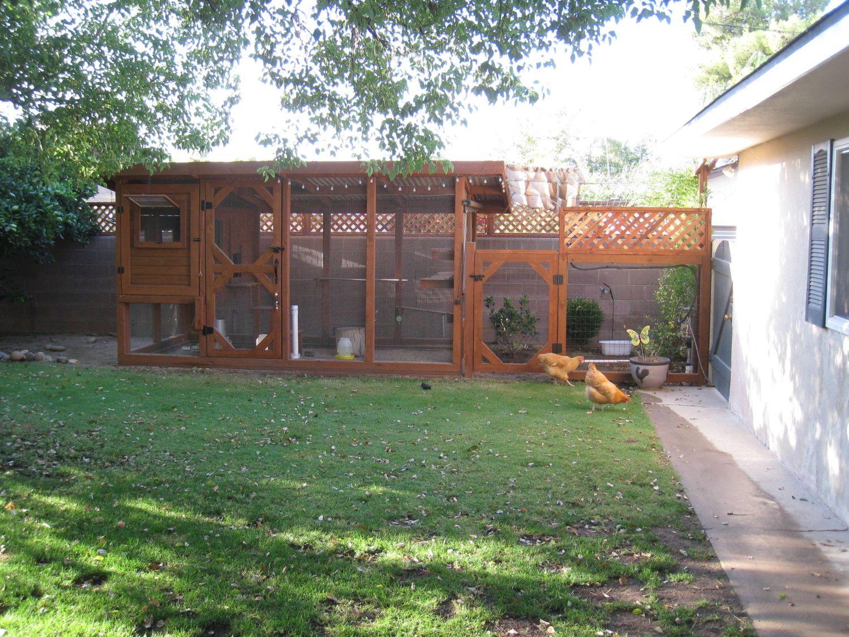 the chicken condo backyard chickens community