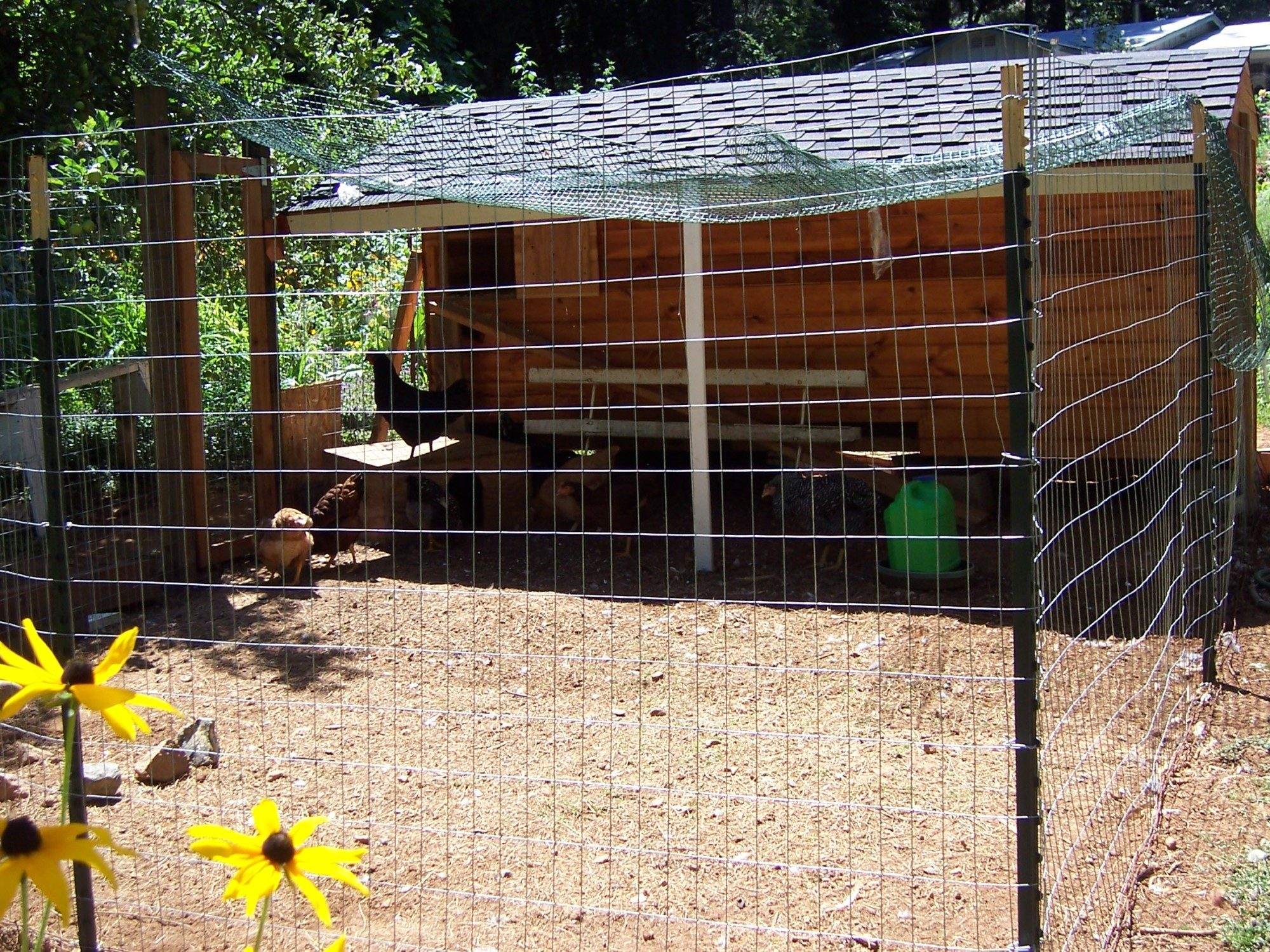 indispensable features page 3 backyard chickens